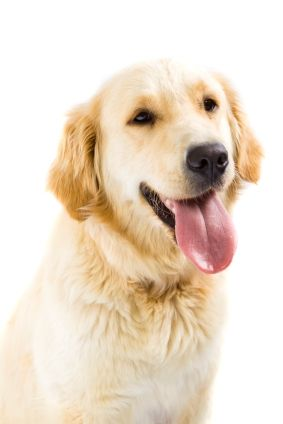 Dog Panting