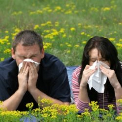 Seasonal Allergy Diagnosis